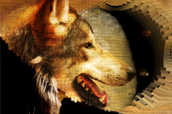 Red_Wolf_Creek_Expt